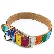 Collier Taille L (33 à 44 cm) Chien Multicolore 25mm - Multicolored collar Dog