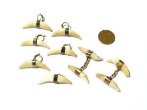 19thC Victorian Cufflinks 6 Button Studs Carnivore  Teeth Taxidermy Trophy