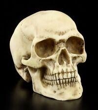 Calavera - Hombres Calavera - Figura Decoración Calavera Skull