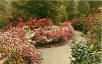 Postcard Magnolia Gardens, Charleston, SC