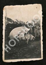 real photo Pigs Animals Soldiers