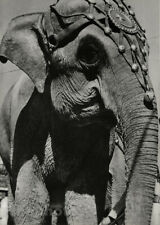 1933 Vintage Circus Elephant Carnival Animal By ROGER SCHALL Photo Art 16X20
