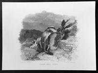 1843 Robert Scott Original Antique Print of a Dead Red Deer by Edwin Landseer