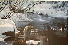 1990 Signed Raccoon in Winter Stream #d Cool Pause Numbered T Isaac Litho #S539