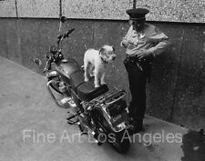 Neal White photo, Cop, Motorcycle, Dog with Goggles, 1970s