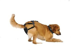 Dog Pregnancy Prevention Harness (Size X-Large) SEE VIDEO