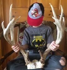 Antlers Mule Deer 5X6 Non Typical!Horn~Decor~Mount~ Sheds~Trophy~Elk~Moose~Lot