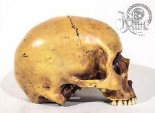 Totenkopf - Menschen Schädel - Figur Deko Totenschädel