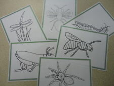 Teaching Resources - Minibeast Picture Tracing Cards
