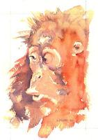 Orangutan POSTCARD Steve Greaves Animal Art Painting Wildlife Monkey Ape Card