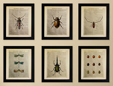 SET OF 6 ART PRINTS ON OLD ANTIQUE BOOK PAGE  Insects, Beetles Vintage Upcycled