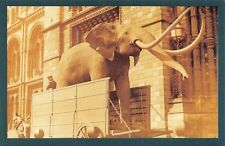 Nostalgia Postcard Stuffed Elephant, Natural History Museum, London, Repro NS51