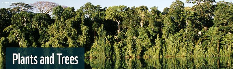 Amazing Rainforest Plants