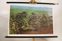 Schulwandkarte Rollkarte Lehrtafel Kaffeeplantage in Brasilien Lateinamerika