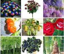 15/40/60/100/110pcs Bonsai Fruit Blueberry Bamboo Tree Seeds Organic Tree Seeds