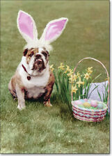 Bulldog with Rabbit Ears Funny Easter Card - Greeting Card by Avanti Press