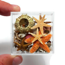 "Acrylic Boxed Natural small Shells Urchins and Starfish 2"" x 2"" Free Shipping"
