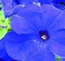 Petunia - Ultra Blue - 30 Seeds