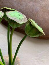 Artificial Lotus Seed Pod Stem Faux Flower realistic single stem green tropical