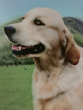 3D Picture Dogs Golden Retriever Size 39 x 29 cm approx New