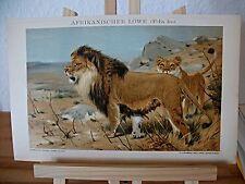 Original-Lithographien (1800-1899) aus Afrika mit Zoologie-Motiv