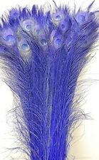 """50 Pcs BLEACHED PEACOCK Feathers 35-40"""" ROYAL BLUE; Halloween/Costume/Wedding"""
