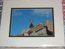 PHOTO ART MOUNTAIN GOAT MT EVANS CO 5X7 MATTED TO 8X10 SIGNED #'D 3/75