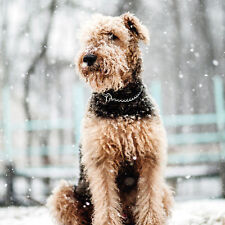 Snowy Airedale Terrier - Christmas Card