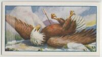 The Eagle And The Arrow Aesop's Fable  Moral Story c85+ Y/O Trade Ad Card