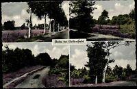 HOLLENSTEDT b. Harburg AK Mehrbildkarte Heide Natur Botanik Pflanzen ~1950/60