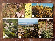 005 CARTOLINA - Sardegna - Monte Limbara - Flora sarda