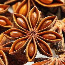 Organic Chinese Star Anise 10 Seeds My Organic Garden Premium Herb Seeds
