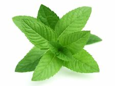 Peppermint Fragrance Oil Soap Making Wax Melts Candles Bath Bombs