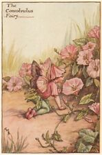 Convolvulus Fairy by Cicely Mary Barker. Summer Flower Fairies c1935 old print