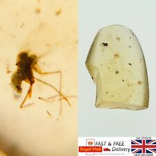 More details for dino age mosquito in cretaceous burmese amber fossil burmite 0.29g *589