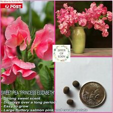"10 SWEET PEA ""PRINCESS ELIZABETH"" SEEDS (Lathyrus odoratus); Fragrant flowers"