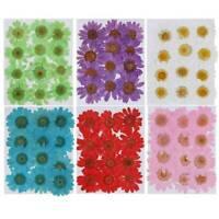 12x Pressed Dried Flowers Plant Herbarium DIY Art Craft Daisy Flower Painting AU
