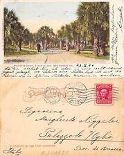 USA Georgia - Savannah - Tybee Island - Palmetto Grove YEAR 1906 (A-L 650)