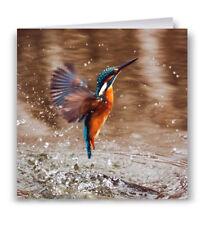 King Fisher Greeting Card - Bird Wildlife
