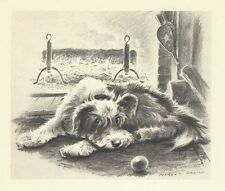 Mixed Breed / Terrier Mutt - Vintage Dog Print - 1947 Morgan Dennis