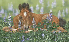"""Lounging in the Lupines"" Judy Larson Fine Art Giclee Canvas"