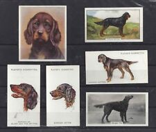 Rare Vintage 1929 - 1952 UK Dog Art Cigarette Card Collection x 7 GORDON SETTER