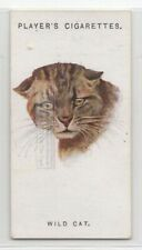 New listing The Wild Cat 85+ Y/O Ad Trade Card