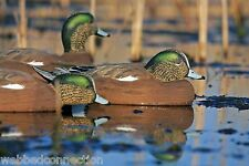 Avery Greenhead Gear Pro-Grade PG Widgeon Wigeon Baldpate Duck Decoys Life-Size