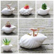 6pcs/set Mini White Succulent Plant Pot Shell Conch Shape Ceramic Flowerpot