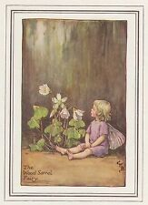 CICELY MARY BARKER c1930 THE WOOD-SORREL FAIRY Painting Vintage Art Book Print