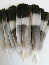 20 + Wood pigeon tail feathers flytying dreamcatchers  jewellery and hair