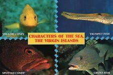 Trumpet & Grunt Fish & Coney, US Virgin Islands --- Sea Creature Animal Postcard