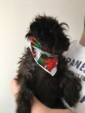 WELSH DRAGON - Medium Size Dog/Cat Bandana - Welsh Rugby - Wales St David's Day