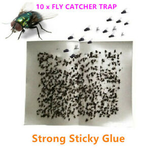 Flies Fly Paper Insect Control Packs of 10 Sheets